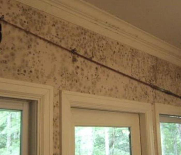 Massive Mold Damage