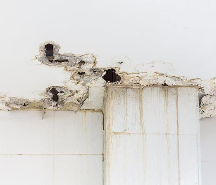 Mold Remediation The Aftermath of Mold Growth Left Alone